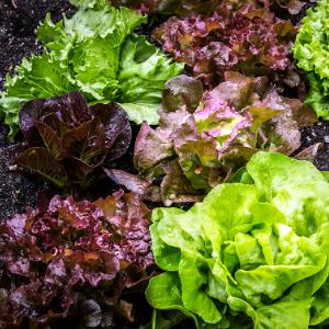 salad-2376777 Kopie