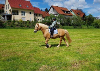 Mühlbauer Hof Ponyreiten