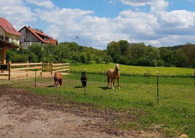 Pony's Novis, Rosa und Paula