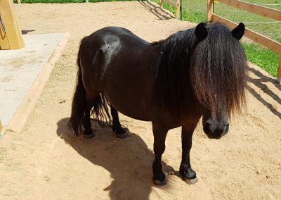 Pony Paula