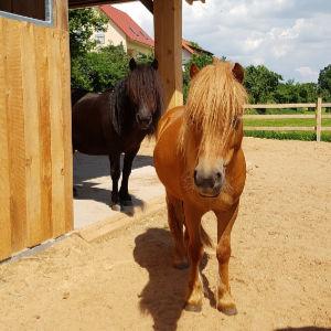 Pony Rosa und Paula