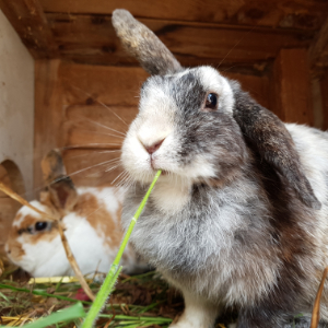 Hase2-300x300px