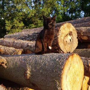 Katze auf Holzstoß-300x300px