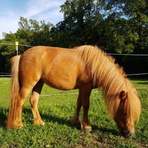 Pony beim fressen300x300px