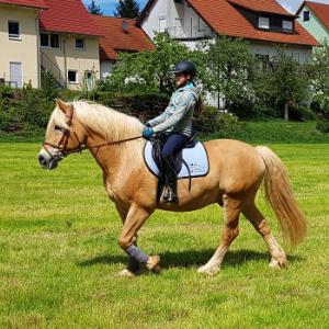 pony mit kind_300x300px